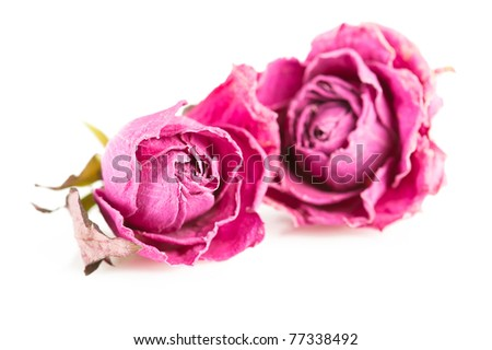 Spa background. Pink roses and herbs on white