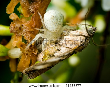 Spider predator insects that are eating into the natural flower nectar