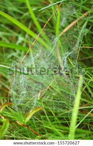 Spider web at meadow