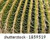 Spikey green sharp Cactus closeup - stock photo