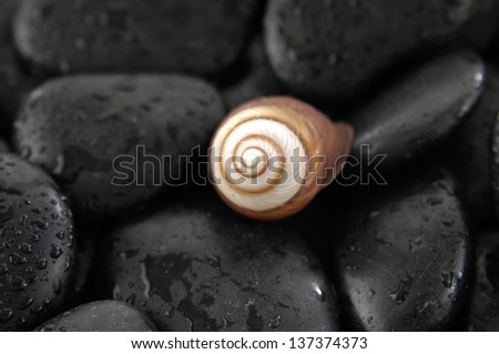 Spiral shell brown and white shell with wet black stones