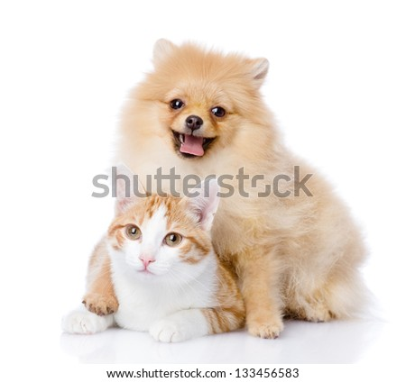 spitz dog embraces a cat. looking at camera. isolated on white background