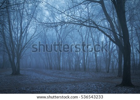 Spooky forest a foggy night. Blue toned photo