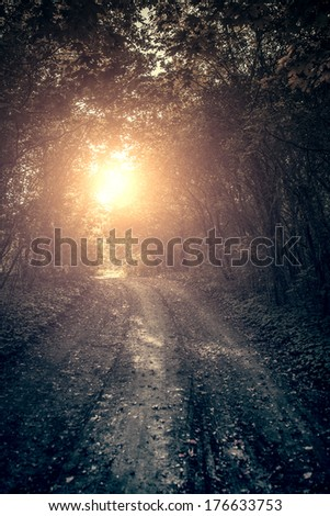 Spooky forest road