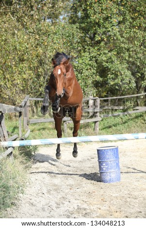 Sport horse jumping in freedom in autumn