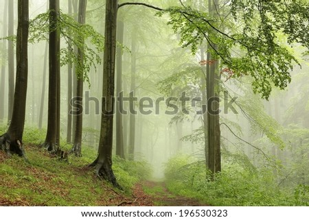 Spring deciduous forest with outgoing fog in the distance.