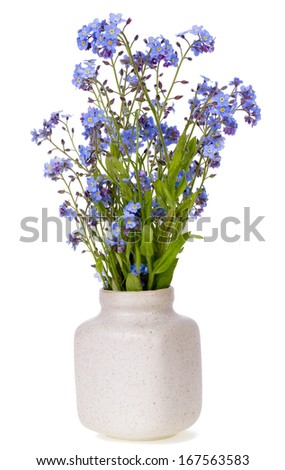 Spring first  blue mini flowers in ceramic pot isolated