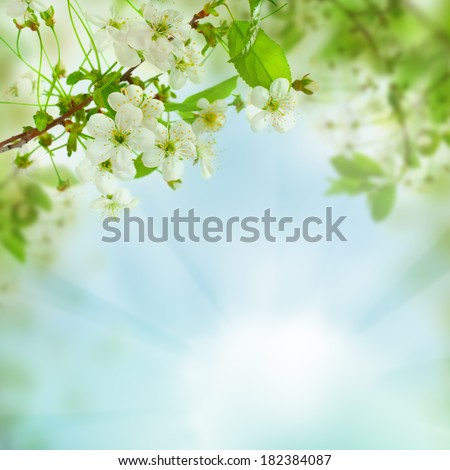 Spring floral background - abstract nature concept with blue sky, leaves and flowers