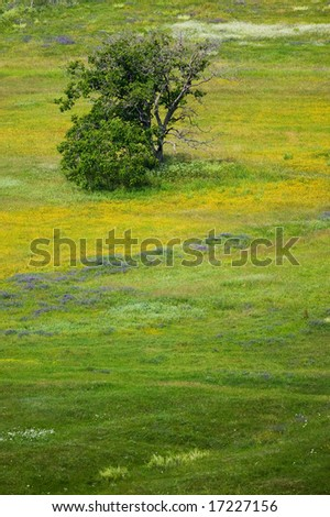 Spring flowers of the field with yellow blossom and an old tree