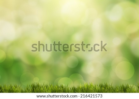 spring green grass with green bokeh and sunlight