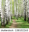 Spring in birch grove - stock photo