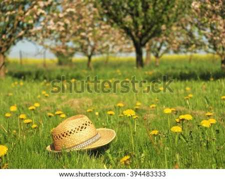 Spring Landscape with dandelions.  Yellow flowering meadow. Nature  background. Garden with straw hat. Flowers.