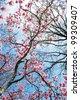 spring magnolia tree flowers - stock photo