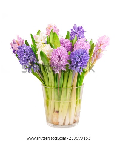 spring multicolored hyacinths in glass on white background, clipping path