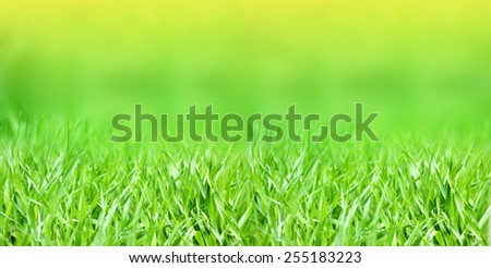 Spring or summer abstract nature background with grass
