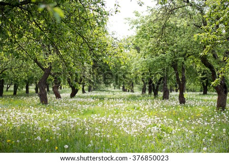 Colorful fruits vegetableshealthy vegan food concept stock photo 485294830 shutterstock - Spring trimming orchard trees healthy ...
