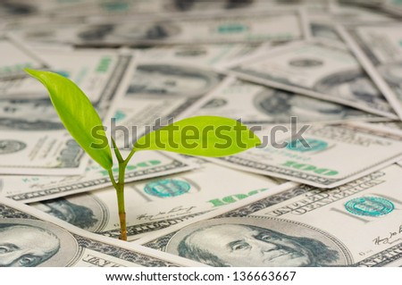 sprout growing on 100 dollar bill