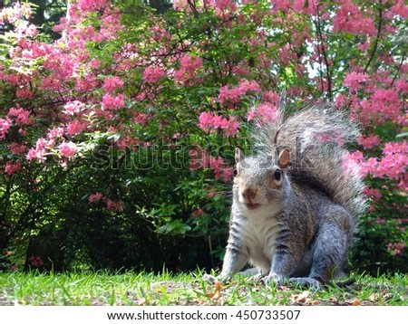Squirrels in woodland