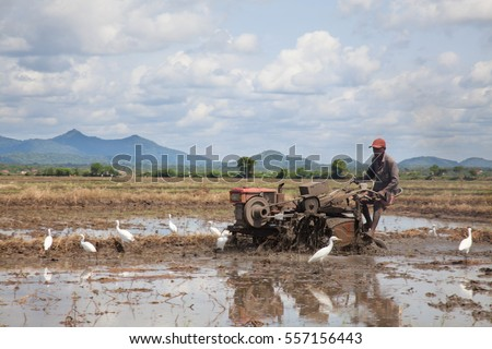 Sri Lankan man work on rice field using tractor. Technologies in farming, Rice plantations covered with water. White birds search for food.
