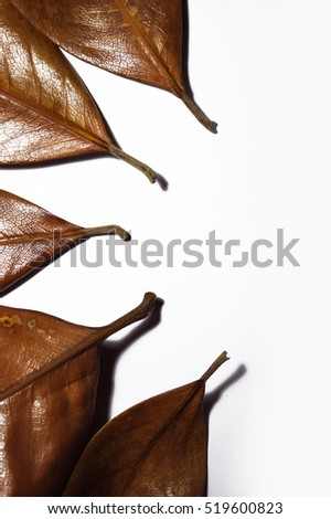 Stalks of brown autumn leaves of magnolia on white background. Space for text at the bottom. Top view.