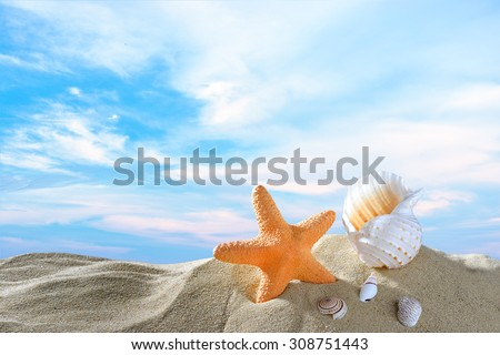 Starfish and seashells on the sandy beach in summer with blue sea and sky travel icon