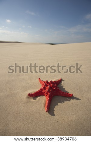 Starfish on a yellow sand beach