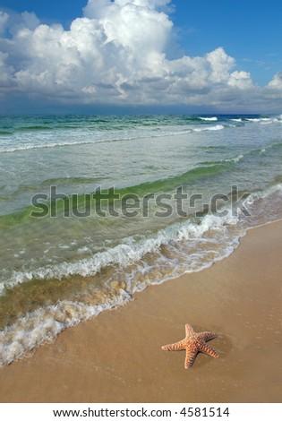 Gold fish swimming one directions while stock photo for Asia cuisine osage beach