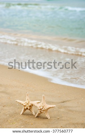 Starfish shell on the beach. Copy space for your text. Close up.