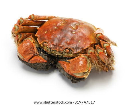 steamed chinese mitten crab, shanghai hairy crab