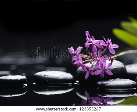 Still life with branch pink orchid with green leaves and therapy stones