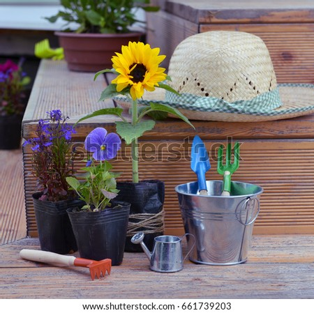 Still Life With Flowers In Planting Pots, Straw Hat And Garden Tools In Cute  Bucket
