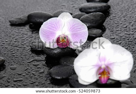 Still life with two white orchid with black stones