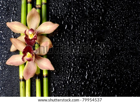stock image of the spa concept-orchid and thin bamboo grove