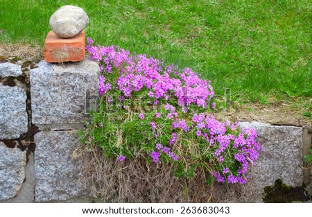 Stone fencing overgrown with flowers - a cozy rural corner