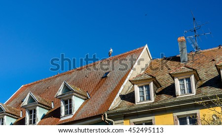 Stork on the roof of a house in Munster, Alsace