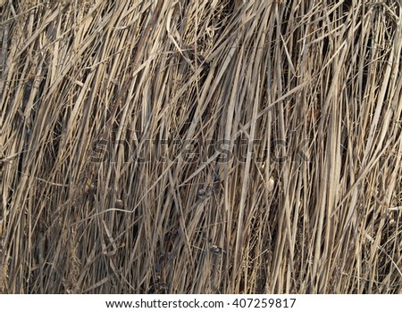 Straw background, hay or dry grass texture