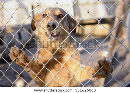 stray dog in shelter locked behind mesh