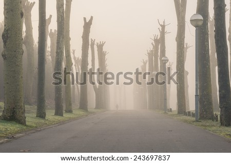 Street surrounded by trees on a cold foggy morning