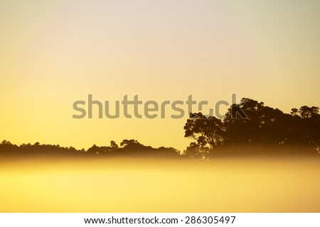 Strip of dark forest with blank pale orange sky and fog bank at dawn