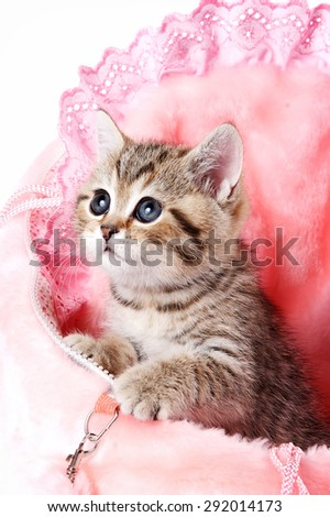 Striped British kitten with big eyes (isolated on white)