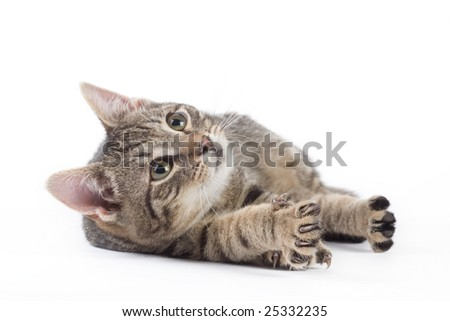 striped kitten, isolated on white