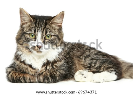 Striped kitten on a white background