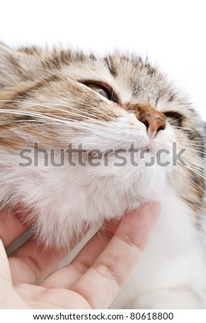Stroking the cat