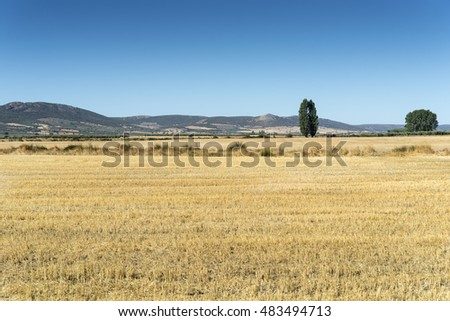 Stubble fields in an agricultural landscape in Ciudad Real Province, Spain.