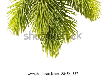 Studio closeup of a fresh fir twig, isolated on white background.