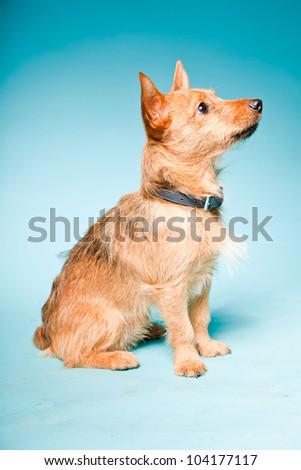 Mixed-breed puppy Stock Photos, Mixed-breed puppy Stock Photography ...