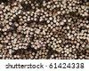 Sugar Cane background - stock photo