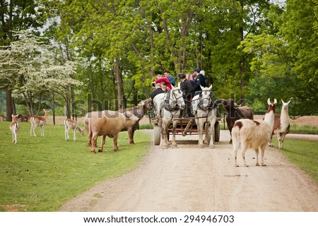 SUGARCREEK, OH - MAY 19, 2015:  Wagon full of tourists feeding the animals at an exotic animal farm run by the Amish.  Main focus on the horses.  Room for your text.