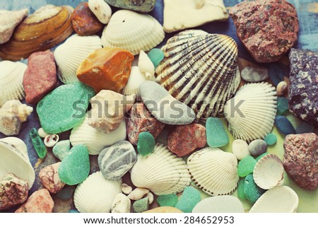 summer background, sea shells
