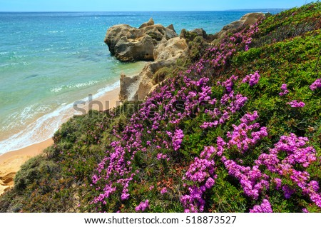 Summer blossoming Atlantic rocky coast view with purple flowers and narrow sandy beach (Albufeira outskirts, Algarve, Portugal).